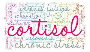 Cortisol and its effect during menopause